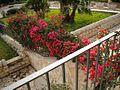 Scicli (Sicilia) 2010 034.jpg