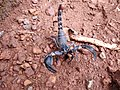 Scorpion (8).jpg