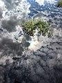 Sebangau River 12.jpg