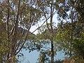Sendero-embalse-de-Bornos P1420636.jpg