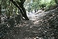 Sentiero della cala della Corsia, isola di Plauno.jpg