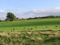 Sheep pasture - geograph.org.uk - 547524.jpg