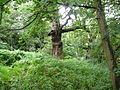 Sherwood Forest 05.jpg