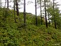 Shirinskiy r-n, Khakasiya Republits, Russia - panoramio.jpg