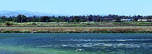 Shoreline Park Mountain View California Salt marsh IMG 2445-12 (cropped).jpg