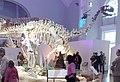 Shunosaurus lii Finland.jpg