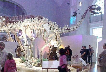 Shunosaurus