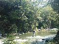 Sistema silvopastoril en cuenca alta del río Coapa, Pijijiapan, Chiapas 17.jpg