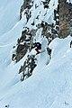 Ski Freeride 2020.jpg