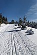 Skiing in Oberhof March 2013-12-Ski track.jpg