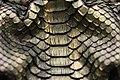Snake Skin Texture (24).jpg