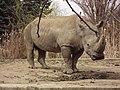 Sofia Zoo - Rhino 006.jpg
