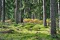 Solig skog - panoramio.jpg