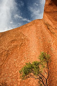 Solitary Tree in Uluru.jpg