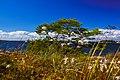 Some sort of vegetation, Fjärdlång, Stockholm (Sweden) - panoramio.jpg