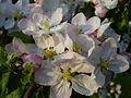 Soubor květů.JPG