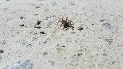 File:Spider closeup.webm