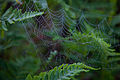 Spring-morning-spiderweb - West Virginia - ForestWander.jpg