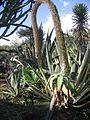 St.leu-conservatoire.botanique.des.mascarins9.JPG