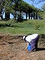 Starr-020111-0003-Ipomoea imperati-watering with EEWF crew-Kanaha Beach-Maui (24250040640).jpg