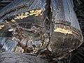 Starr 041211-1301 Eucalyptus sp..jpg
