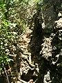 Starr 050419-0415 Schinus terebinthifolius.jpg