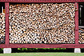 Stock of lumber uncroped 1.JPG