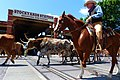 Stockyard Cattle Drive.jpg