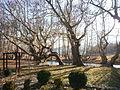 Strumeshnitsa river 2011, 03.JPG