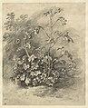 Study of Mallows by Thomas Gainsborough.jpg