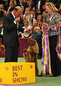 "A group of judges holding a silver trophy and a large rosette next to a brown dog standing on its back legs. In the foreground is a large yellow sign marked ""Best in Show"""