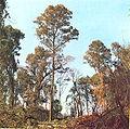Styrax leprosus.jpg