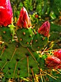 Succulents - Photo by Giovanni Ussi 1.jpg