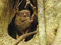 Sulawesi trsr DSCN0260 v1.JPG