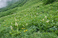 Suribachikubo 16.jpg