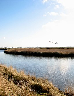 Swans flying upstream along the River Bure, Mautby Marsh - geograph.org.uk - 2237359