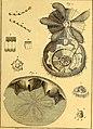 Tableau encyclopédique et méthodique des trois règnes de la nature (1791) (14581547069).jpg