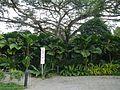 Tanglin, Singapore - panoramio (2).jpg