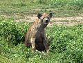 Tanzania1 019 - Flickr - gailhampshire.jpg