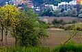 Tavasz színei - panoramio.jpg