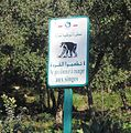 Tazza ziama algeria.jpg
