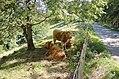 Terneros Escoceses en Guipúzcoa - panoramio.jpg