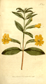 The Botanical Magazine, Plate 354 (Volume 10, 1796).png