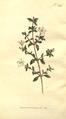 The Botanical Magazine, Plate 361 (Volume 11, 1797).png