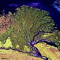 The Lena River, some 2,800 miles long, is one of the largest rivers in the world. Original from NASA. Digitally enhanced by rawpixel. - 44544671760.jpg