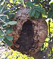The Nest of wasp.jpg