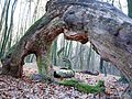 The Oak Ark.jpg