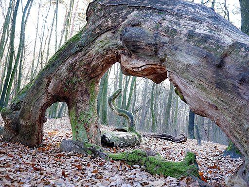 The Oak Ark