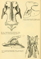 The Osteology of the Reptiles-162 fty.png