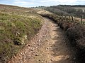 The Quantock ridgeway near Crowcombe Park Gate - geograph.org.uk - 1766902.jpg